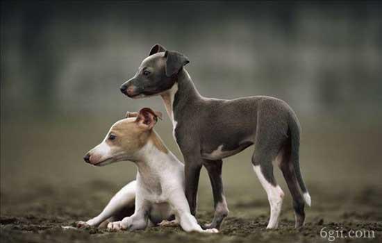 猫和狗能一起养吗 教你猫和狗敌人如何变朋友