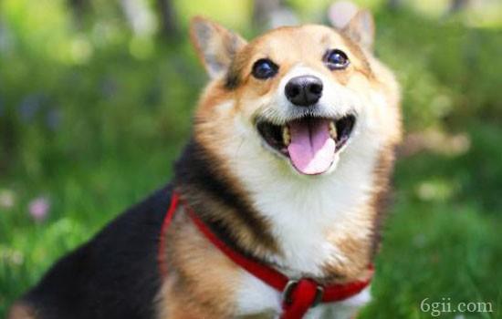 怎么跟狗狗建立权威 主人在狗眼前这样树立权威