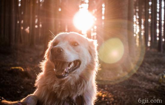 如何树立在狗狗眼里的地位 权威树立有方法