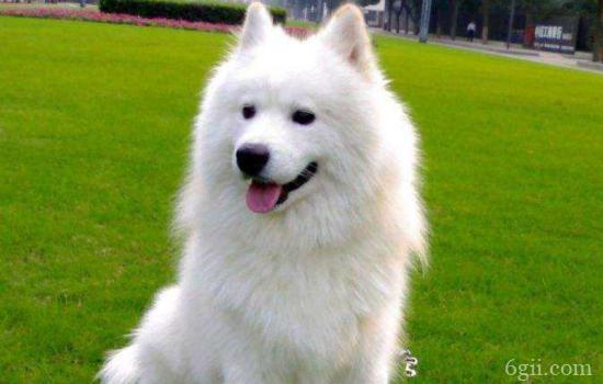 怎样才能让狗狗听话 训练技巧