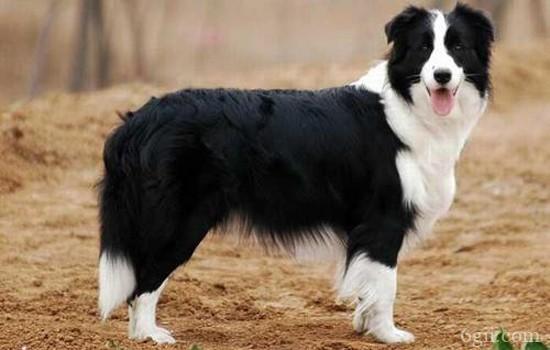 怎么让狗狗快速安静下来 快速让狗狗安静的七大妙招