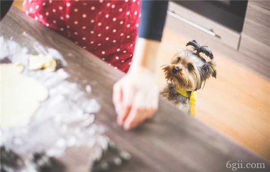 狗狗喜欢舔人的脚 如何阻止狗狗舔人