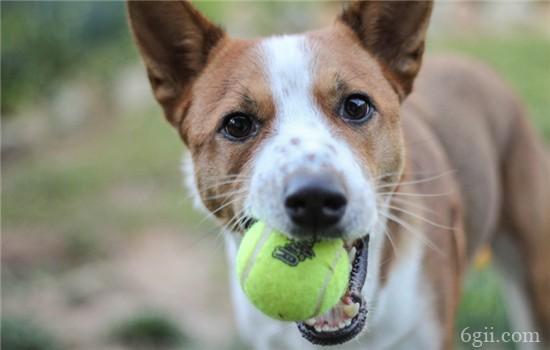 狗狗乱咬东西怎么办 如何纠正狗狗乱咬的恶习