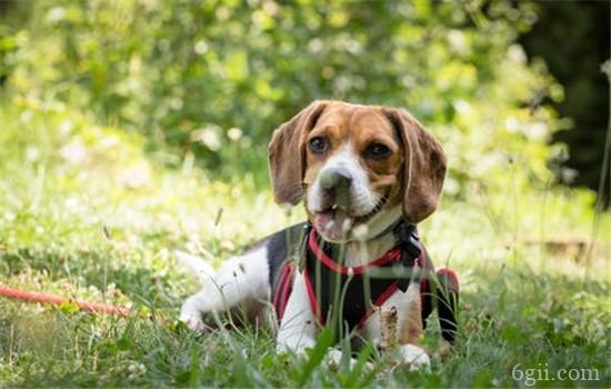 如何训练狗狗吃饭 正确的训练方式你知道吗