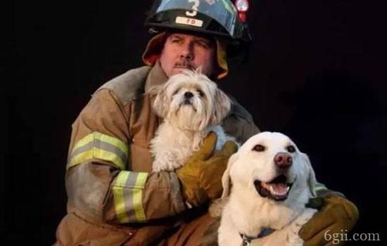 怎么教狗狗搜救 搜人搜物训练
