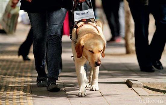 怎么训练狗狗救人 救生犬专业训练