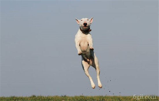 训练狗狗需要什么 这些辅助道具你有吗