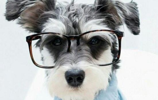 狗狗怕医生怎么办 多训练训练就好了