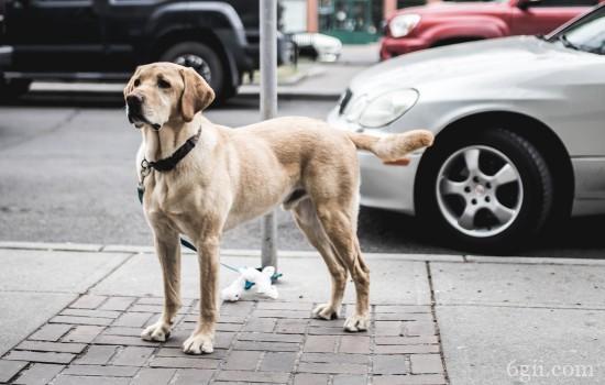 怎样教狗狗上狗厕所 让狗狗定点上厕所