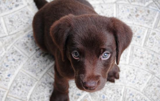 训练狗狗上厕所要注意的事 这些主人要知道