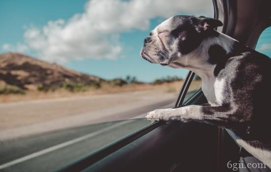如何安全带狗狗乘车 主人看这一篇就足够了