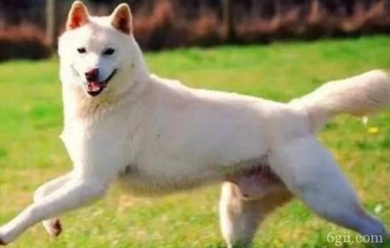如何训练狗狗接飞盘 与狗狗一同游戏的好方法