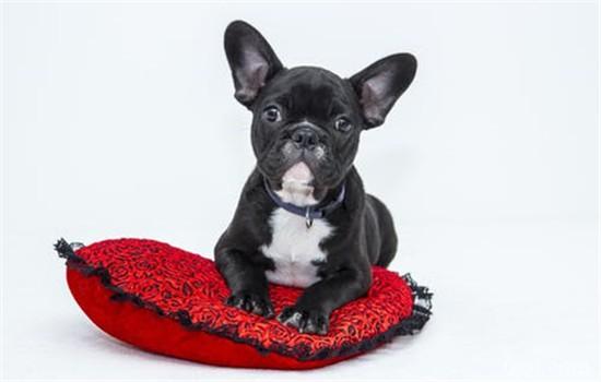 狗不定点排便怎么训练 训练狗狗之前要观察狗狗的排泄习惯