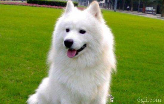 狗狗有攻击性的原因 你知道为什么狗狗会攻击主人吗?
