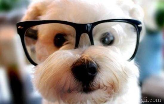 """怎么训练狗狗只跟自己 如何训练狗狗""""紧跟""""主人"""