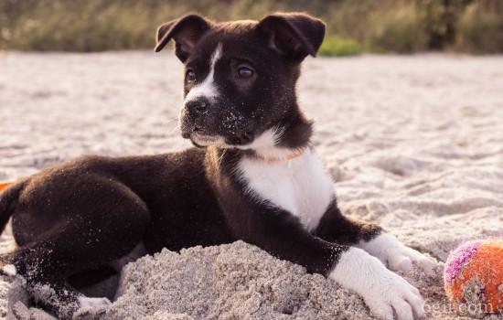 训练狗狗要注意什么 这些小技巧教你训出好狗狗