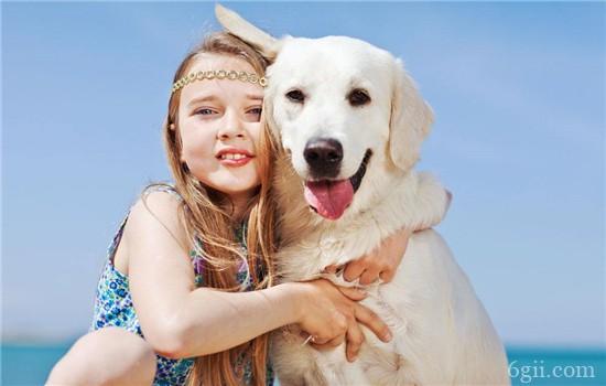 狗狗喜欢叫是什么原因 狗狗坏习惯不能惯着它!