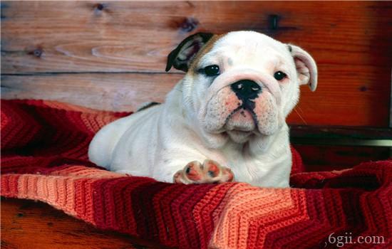 狗狗喜欢爆冲怎么办 别让你遛狗变成狗遛你了!