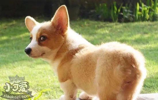 狗狗不玩玩具怎么办 你多输给它两次,狗很乐意与你玩耍