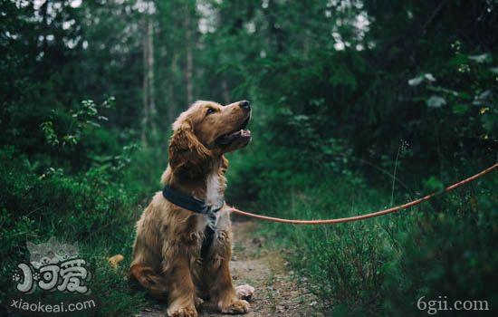训狗的基本方法和目的 训练应该结合正加强和负加强
