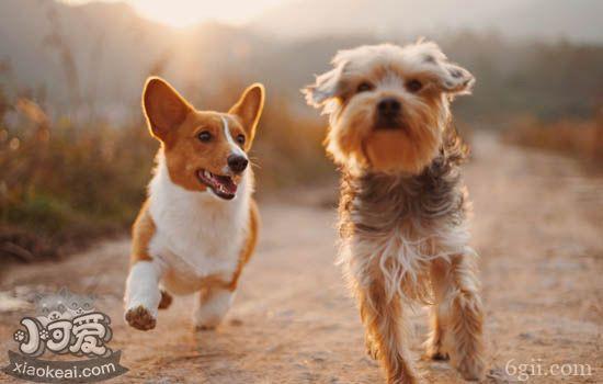 训练狗狗注意事项 训练中的狗狗更能读懂你的语气和音调