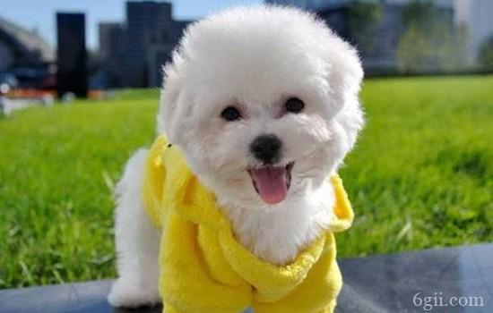两个月小狗爱叫 别让狗狗从小养成了扰民的习惯