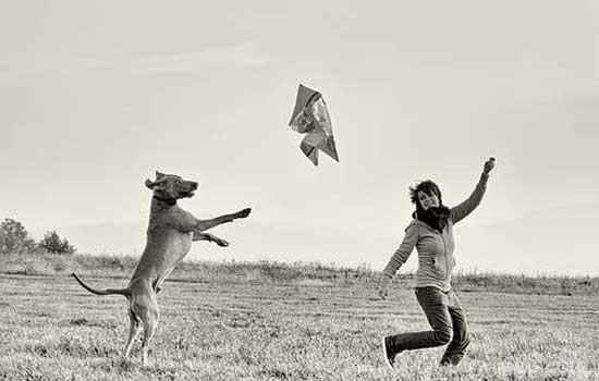 马犬的动力训练 狗狗和人一样需要自信喔!