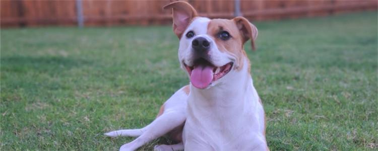 狗在外面捡东西吃怎么办 不能随便放任狗狗捡东西吃