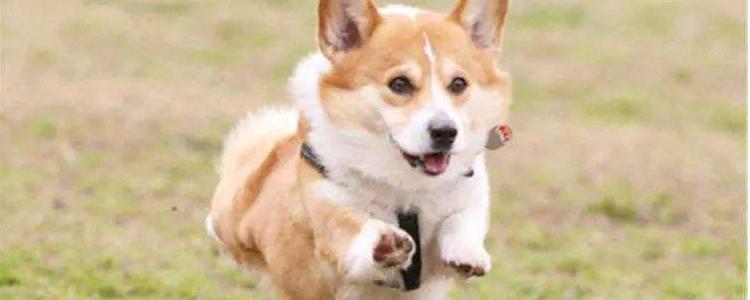 狗狗如何止吠 狗狗爱叫无非就是这五个原因!