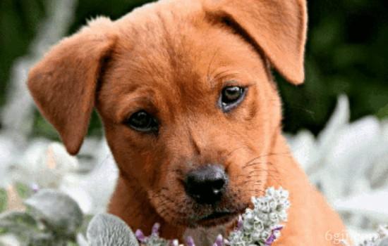 狗狗拒食训练 这种训练有多重要,主人要明白!