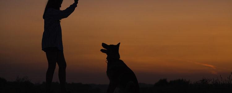 狗狗独自在家一直叫怎么办 你需要教它如何独处