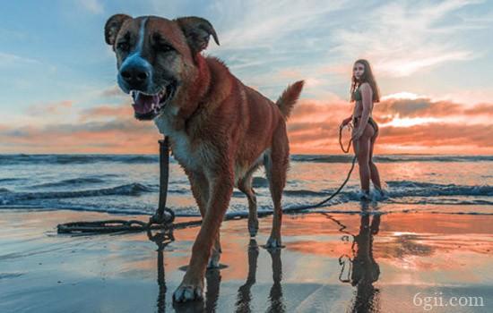 狗狗产后抽搐怎么回事 产后抽搐别掉以轻心