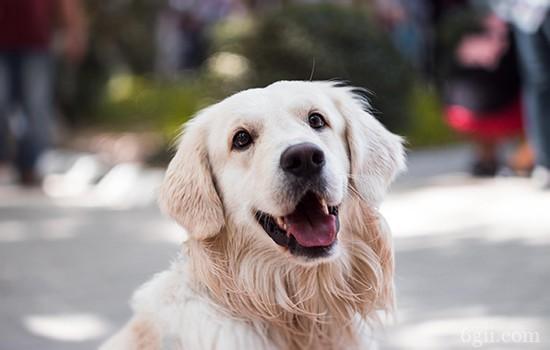自己怎么给狗狗驱虫 狗狗常见寄生虫驱虫手册