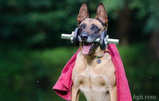 狗狗传染性肝炎有什么症状 疾病预防要重视