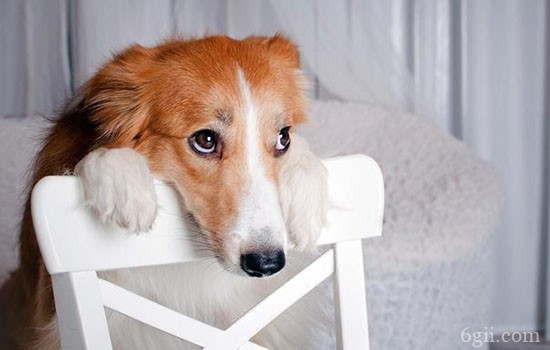 犬弓形虫病的症状 弓形虫重在预防