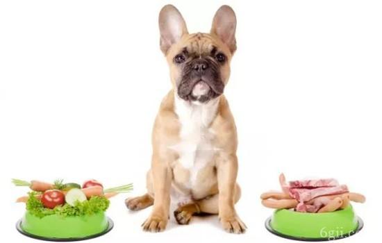 怎么知道狗狗有没有虫 这些驱虫误区你踩了吗