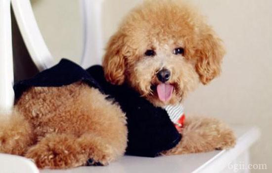 狗狗总是流泪怎么回事 跟健康有很大关系!