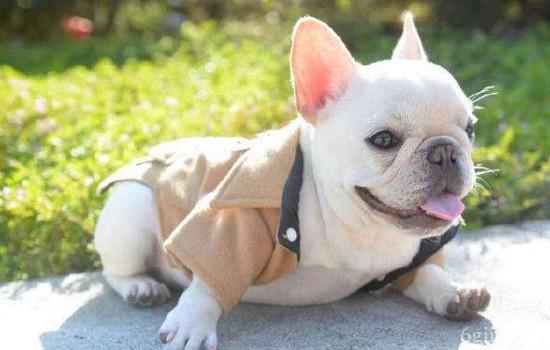 狗狗螨虫病症状表现有什么?【图】 严重可致神经性脑炎