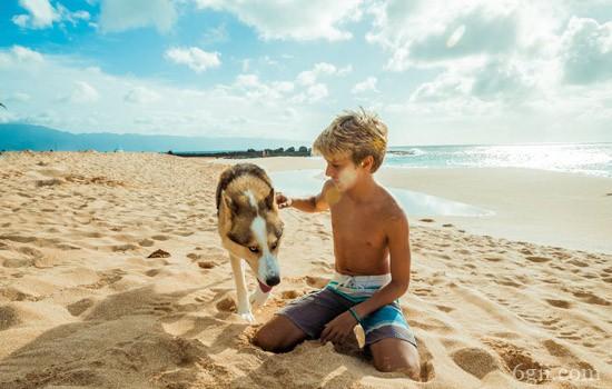 狗狗趾间炎怎么治疗 太过爱干净也可能导致疾病