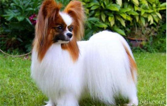 狗狗频繁舔爪子 或是疾病征兆