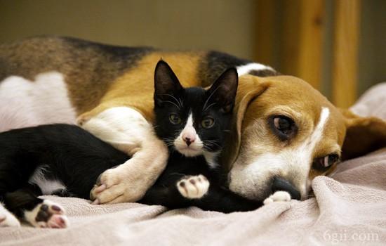 狗狗中毒了用什么办法可以解毒 狗不同中毒情形的应急处理