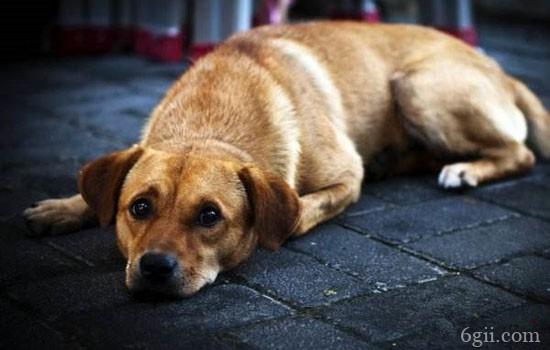 狗呕吐怎么回事 狗呕吐吃什么药