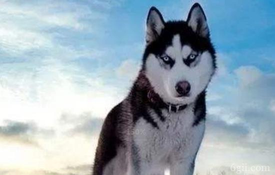 狗狗贫血是什么原因 狗狗贫血竟然还有这么多原因啊!