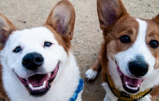 狗狗肠胃感染寄生虫的症状 主人要注意给狗狗驱虫
