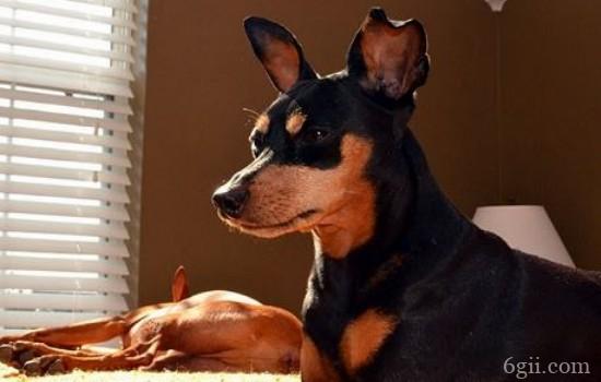 狗狗胃炎的症状 你知道狗狗患上胃炎的原因吗