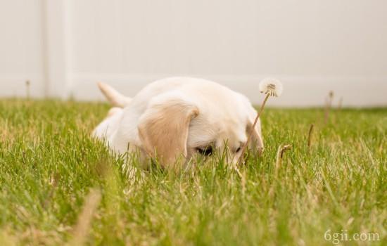 狗狗肠炎怎么办 不可忽视的狗狗疾病