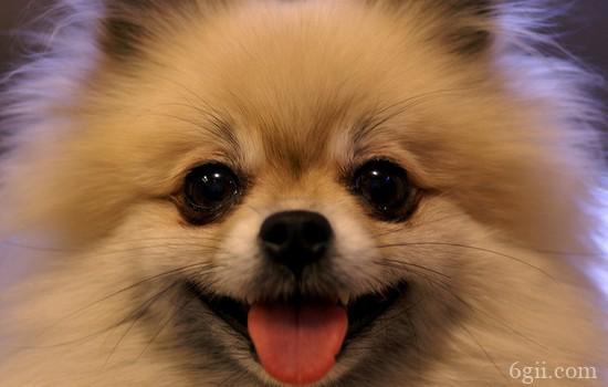 狗狗前列腺炎的症状 你知道背后的患病原因吗?