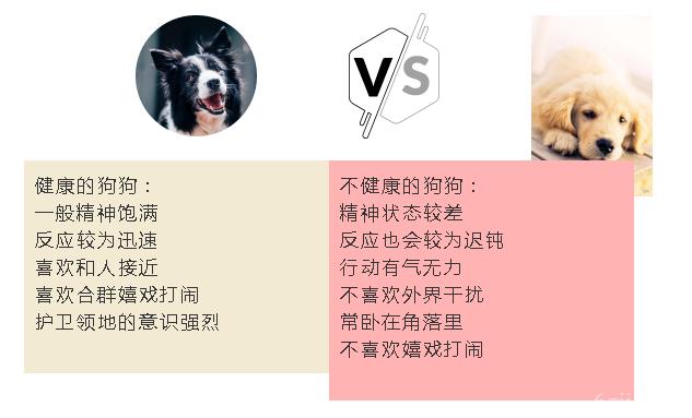 怎么选狗幼崽 教你挑选一只健康的狗狗