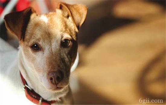 犬瘟是什么 犬瘟是由什么引起的