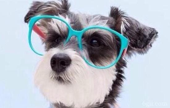 狗狗结膜炎症状 狗狗的眼睛要小心保护啊